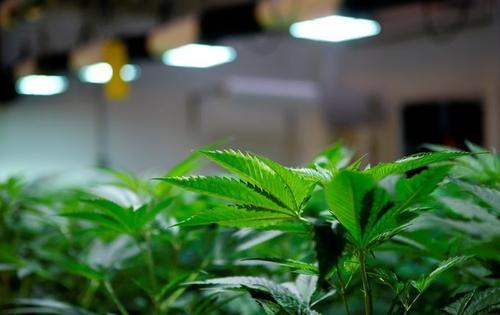 浙江温州摧毁一利用虚拟币交易贩毒团伙 缴获成品大麻16余公斤